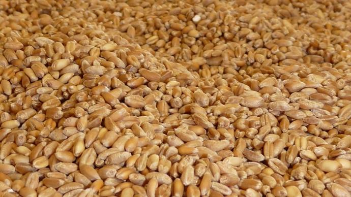 Grains de bl�